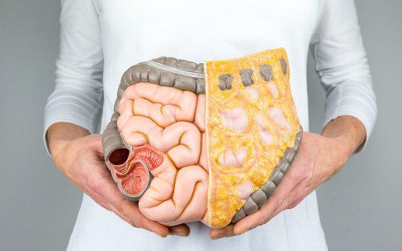 Tác hại của mỡ nội tạng và cách làm giảm